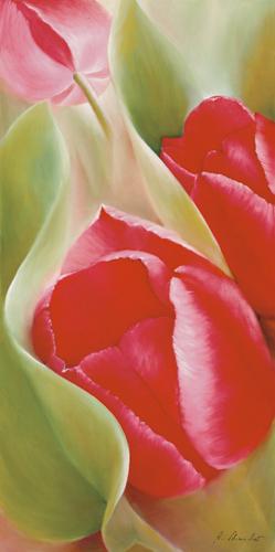 Annette Schmucker Tulpen I