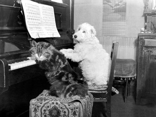 Anonym Cat And Dog Playing Piano