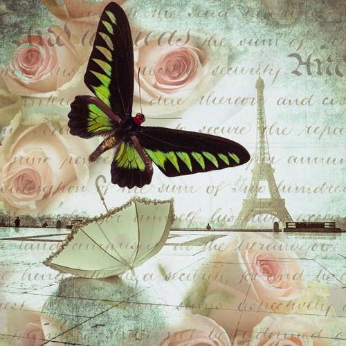 Assaf Frank Butterfly Ii