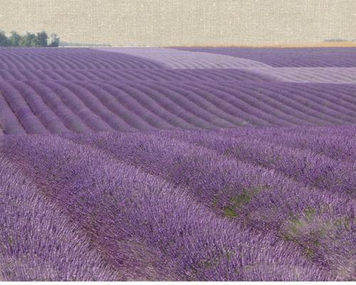 Bret Straehling Lavender On Linen 1