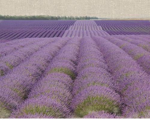 Bret Straehling Lavender On Linen 2
