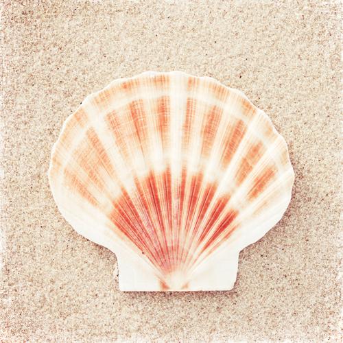 Carolyn Cochrane Scallop Shell
