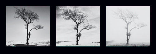 Dave Butcher Lone Trees