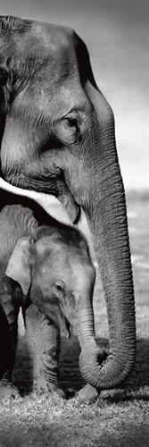 Gavriel Jecan Indian Elephants