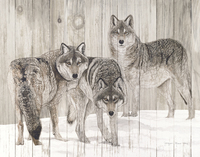 Jacquie Vaux Three Grey Wolves On Wood