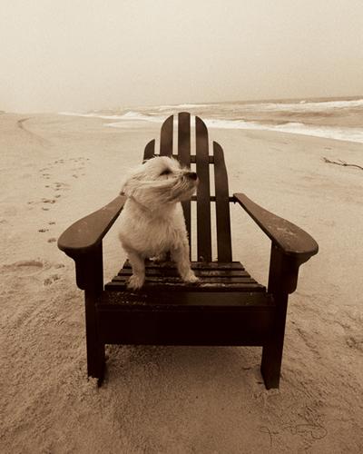 Jim Dratfield Life S A Beach