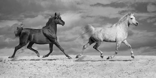 Jorge Llovet Horse Dancers