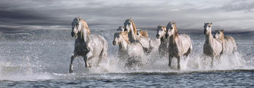 Jorge Llovet Horses Running At The Beach 39922