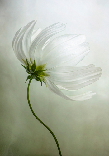 Mandy Disher Cosmos Charisma