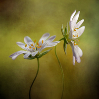 Mandy Disher Echo