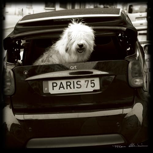 Marc Olivier Paris Dog I