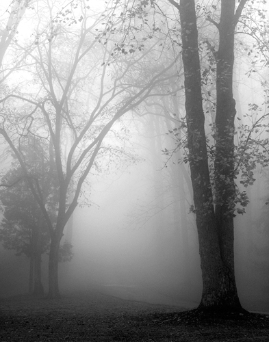 Nicholas Bell November Fog
