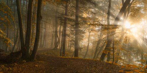 Norbert Maier Forest Light