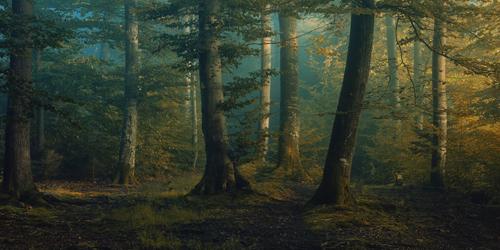 Norbert Maier October Colors