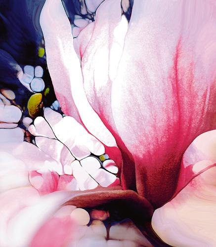 Renate M Schmidt Magnolie 40550