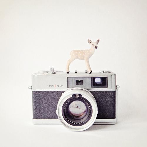 Susannah Tucker Photography Deer Vintage Camera