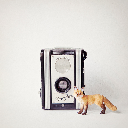 Susannah Tucker Photography Fox Vintage Camera