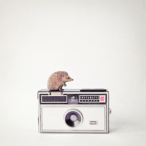 Susannah Tucker Photography Hedgehog Vintage Camera