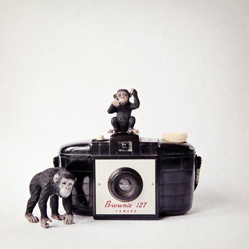 Susannah Tucker Photography Monkey Vintage Camera