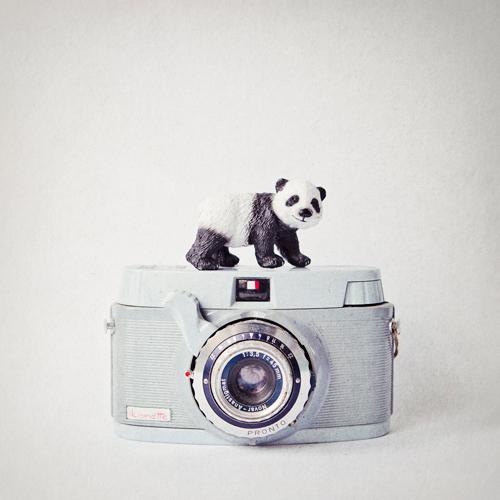 Susannah Tucker Photography Panda Vintage Camera