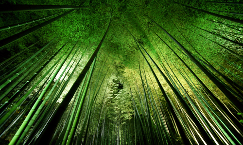 Takeshi Marumoto Bamboo Night