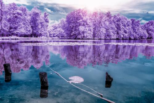 Tonee Gee Majolan S Park Reflections I Bordeaux