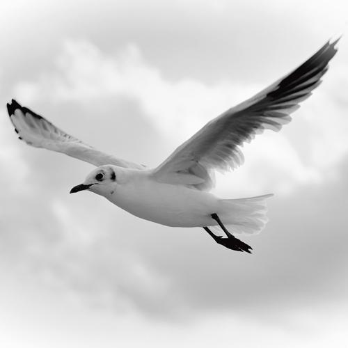 Uwe Steger Fly Away