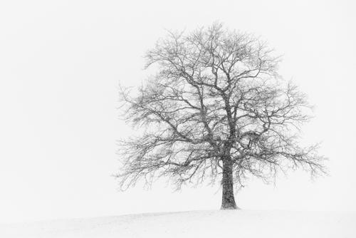 Uwe Steger Wintersturm I